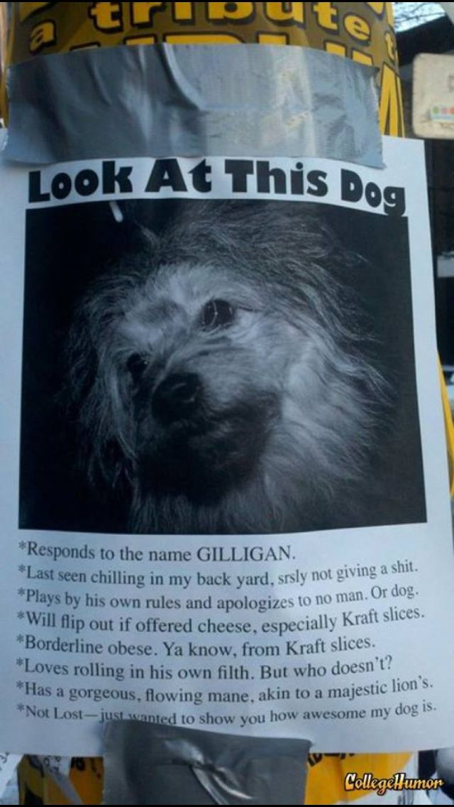 Funny missing dog posters. Humor dogs