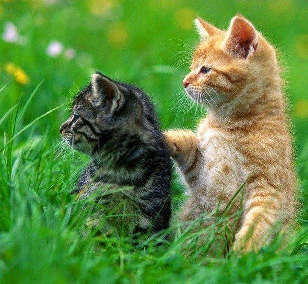 Gambar Kucing Hewan Lucu Dan Imut Kucing Hewan Hewan Lucu