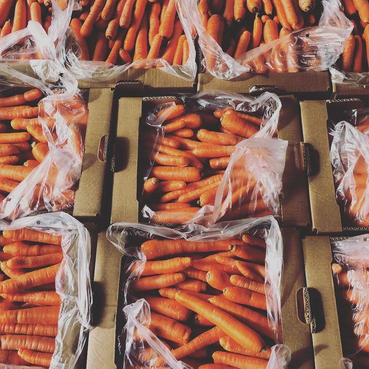 Hoy en nuestro último lunes cerrado, ya por fin abriremos todos los días ☀️a partir de la semana que viene ☺️! Y sabéis que hemos hecho hoy? Visitar el huerto ecològico que provee a #brunchit de fruta  y verdura  es una explosiòn de olores, sabores y colores increíble!!  que nos llena energía  Nos hemos llevado estas zanahorias maravillosas, non ha enamorado su color! ❤️ #brunchitorganic  #eco #bio #foodporn  #foodie #yummie #comesano #vive #welove #welive