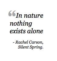 Silent Spring Analysis
