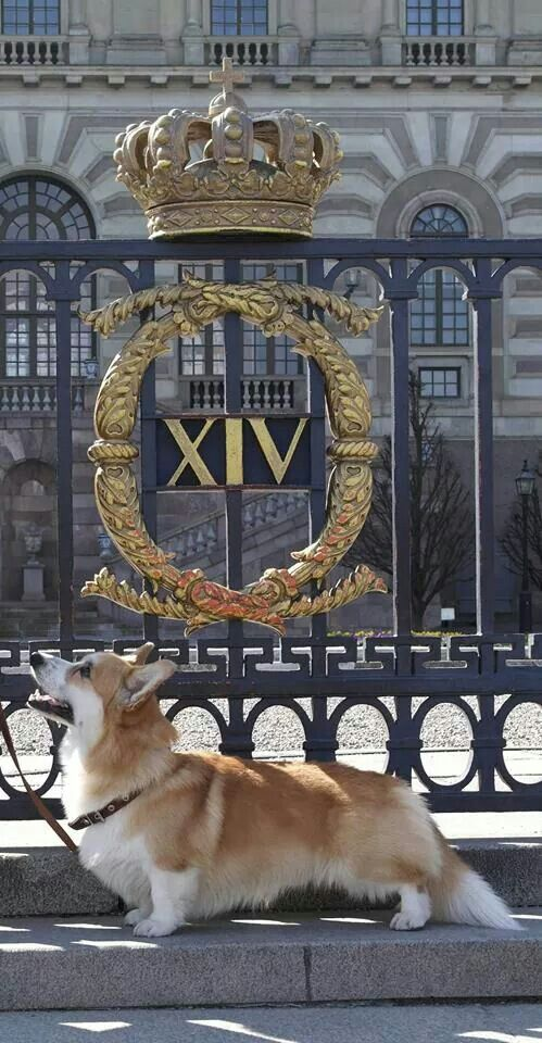 I doubt this Corgi belongs to the Queen because it is outside the gate of Buckingham Palace but I like the pic.