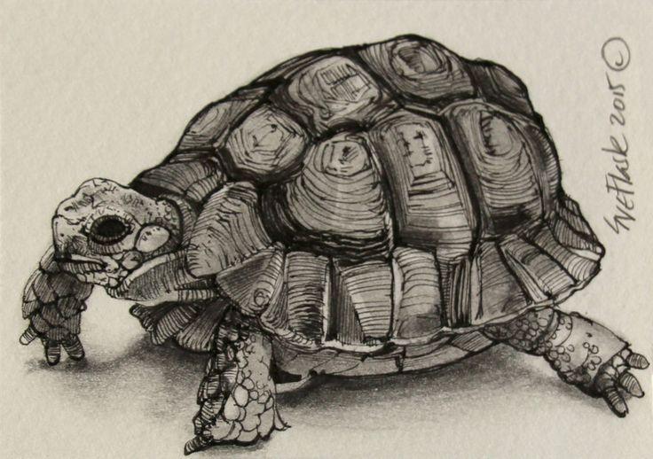 tortoise drawing for pinterest - photo #6