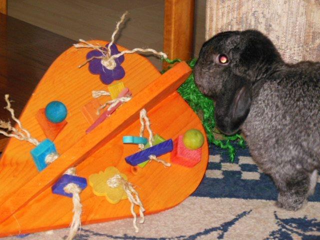 Crazy HUGE Carrot Toys for Bunnies $49.97: Playground Equipment, Pet Rabbit, House Rabbit, Huge Carrot, 07 Pets, Carrot House, Rabbit Playground, Carrot Rabbit