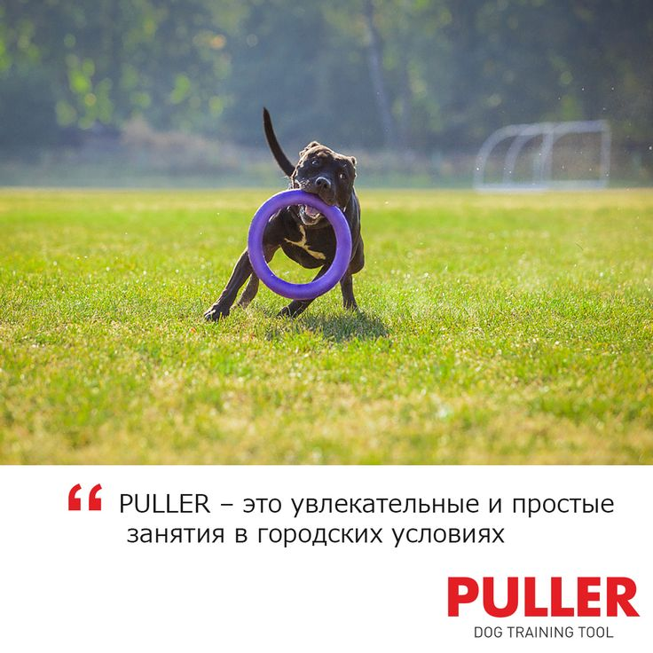 ✔ PULLER решает проблему недостатка активности для собак, которые живут в городе. С фитнес-снарядом занятия полноценны даже при ограниченном пространстве на тесных площадках.  #puller #puller_com #пуллер