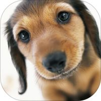 Puppy School: your complete puppy training and dog training guide by Aimer Media Ltd.