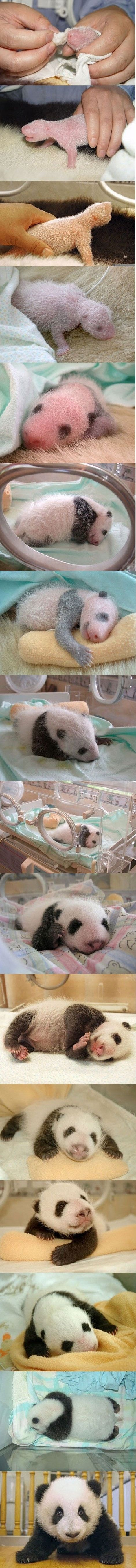 Watch its growth in Pandavision!