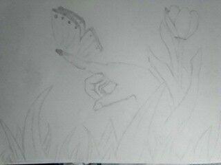 Dibujo mariposa