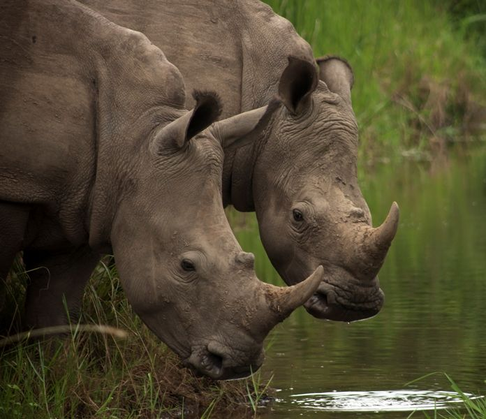 www.thulathula.com #rhino #wildlife #RhinoSummit2014