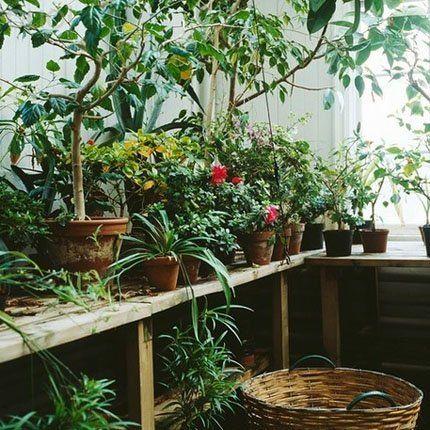 Un jardin d'intérieur dépaysant - Marie Claire Maison