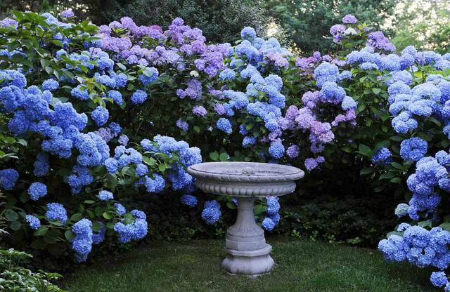 : Modern Gardens, Gardens Ideas, Blue Hydrangeas, Gardens Design Ideas, Gardens Fountain, Interiors Design, Stacy Bass, Birds Bath, Transitional Home