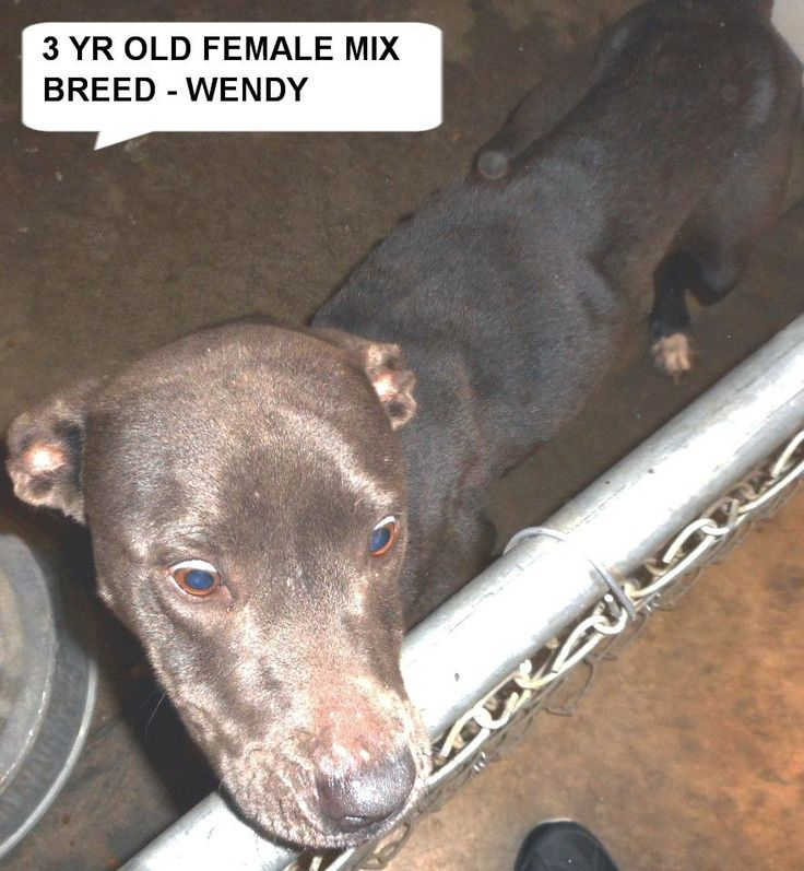 WENDY ,PLEASE SAVE HER located in Elizabethtown, NC has 4 days Left to Live. Adopt him now! BUY more time DONATE to Shelter Friend with a NOTE SAVE WENDY