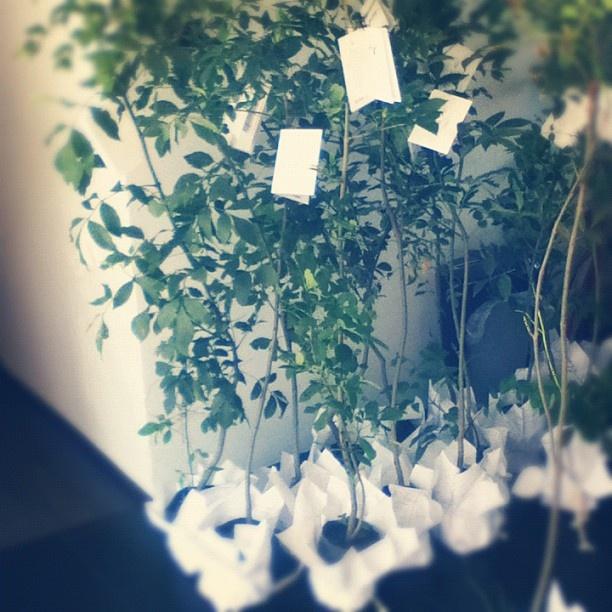 Invitaciones ecológicas Unarte.: Invitacion Ecológica, Ecológica Unart, Ecológicas Unarte, Invitaciones Ecológicas