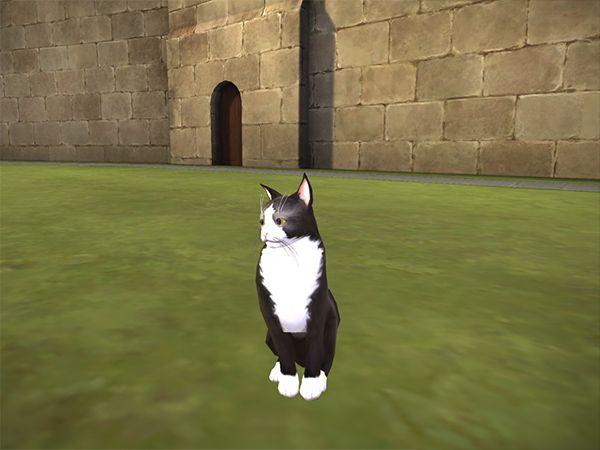 Cat Animagus In Hogwarts Mystery Hogwarts Mystery Hogwarts Mystery