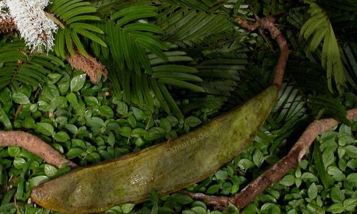 AMAZONAS ROHSTOFFE  - https://de.pinterest.com/rohstoffe/