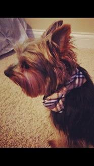 Burberry Bow Tie Collar