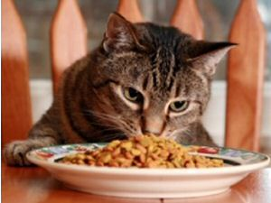 Easy healthy cat treat recipes