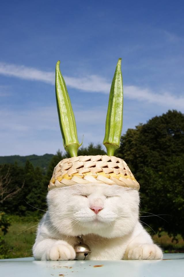 かわいすぎるワンコとニャンコが登場! ブログで話題のあのコをチェック!! - Shironeko, Japan's celebrity cat, receives transmissions in the garden. - #Cats