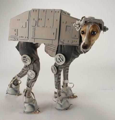 @Cherie S  You did make one of these for Margot, didn't you?Halloweencostumes, Dogs Costumes, Star Wars, Dogs Halloween Costumes, Dog Costumes, Stars Wars, Italian Greyhounds, Starwars, Pets Costumes