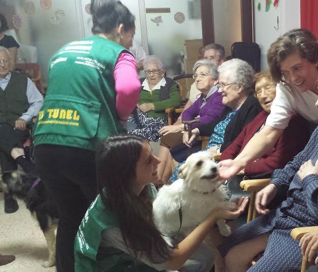 #residenciapersonasmayores San Francesc Ontinyent #intervencionesasistidasconperros