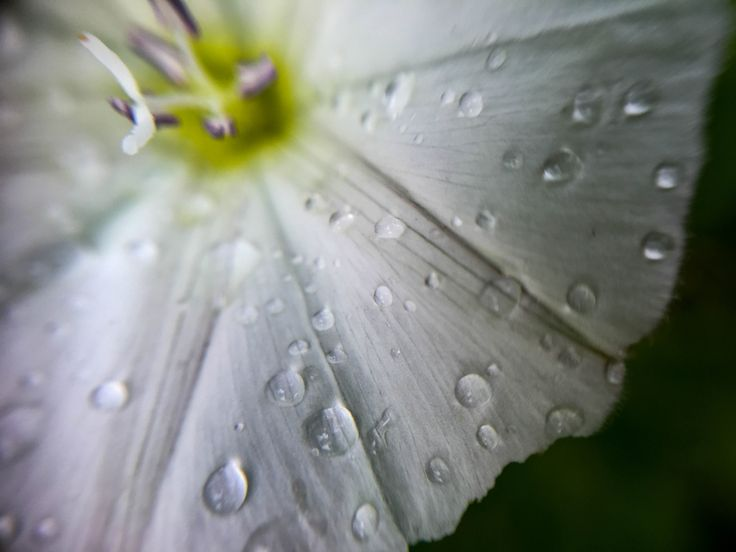 Macrovideo on a rainy day - Story from the garden shot with a phone camera