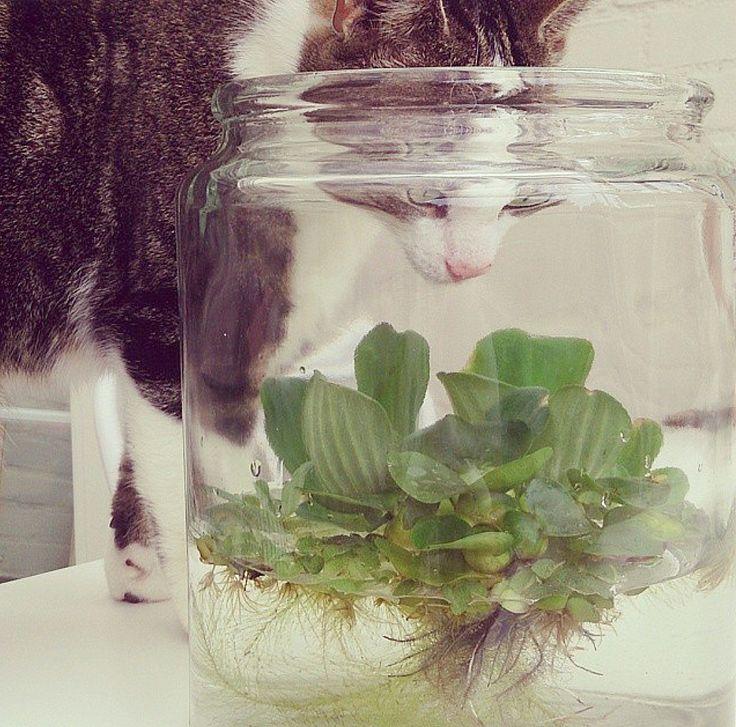 waterplanten in pot