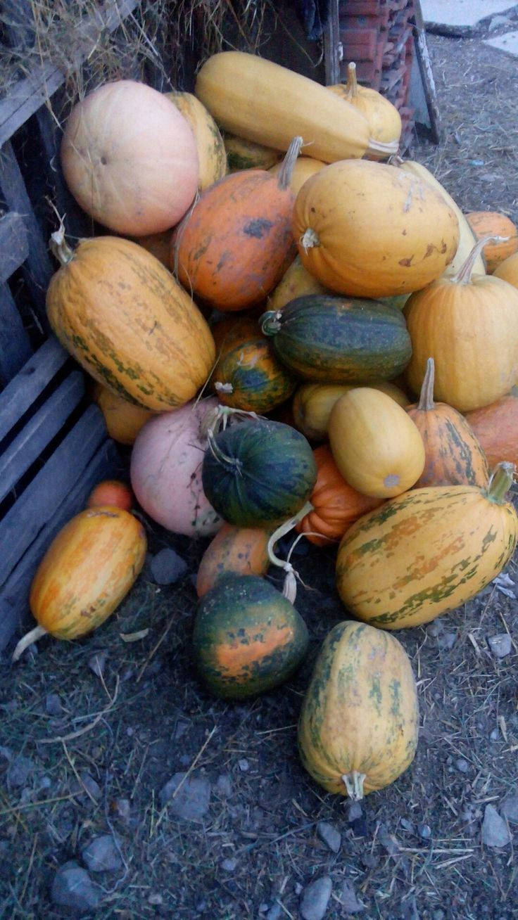 #pumpkin