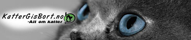 Fakta om katterasen BOMBAY http://www.kattergisbort.no/2012/09/30/fakta-om-katterasen-bombay/ #katt #katter #bombay #rasekatt #rase #pus #pusen #dyr #husdyr, #kjæledyr