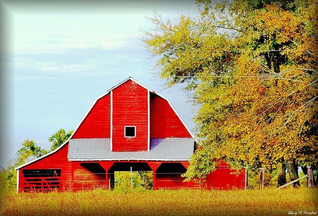 Near Murray, KY: Barns Bridges Windmills, Farms Barns, Barns 1001 1250, Beautiful Barns, Barns Churches, Beautiful Places, Barns 1751, Barns Buildings, Barns Farms