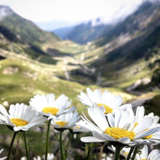 #Transfagarasan #PureRomania #travel