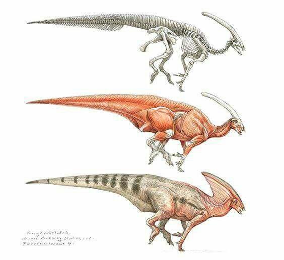Parasaurolophus study