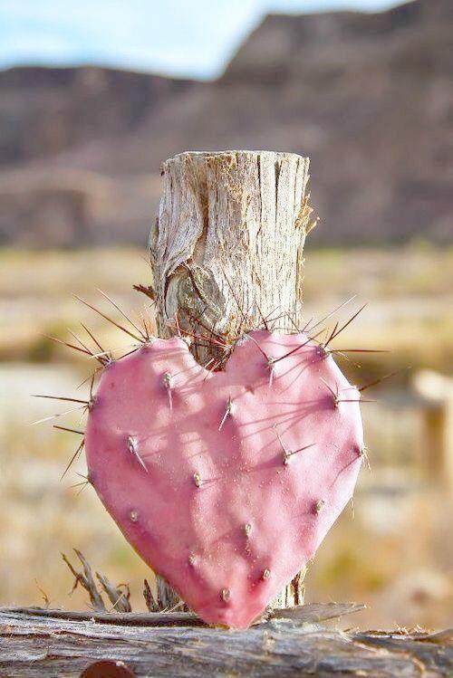 Cactus Rosa con forma de corazón #Rosa #PensandoEnRosa