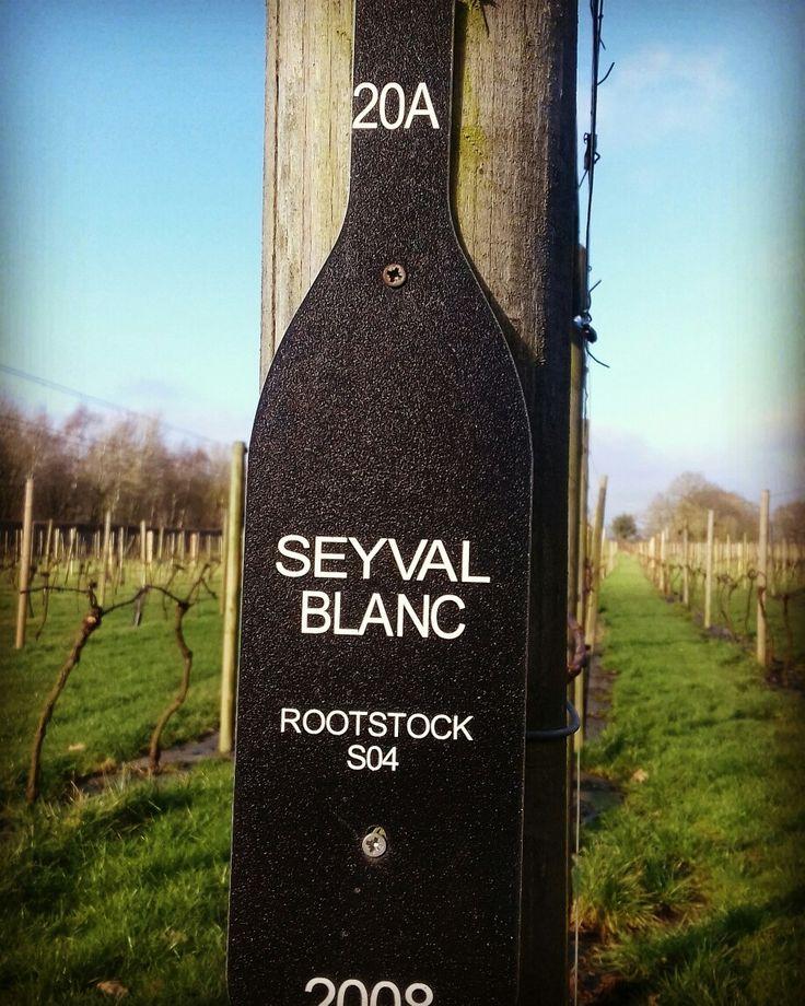 Yorkshire Heart Vineyard.  Vine row labels