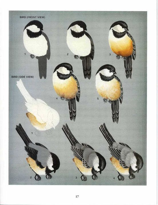 BIRDS - Oksana Volkova - Picasa Web Albums