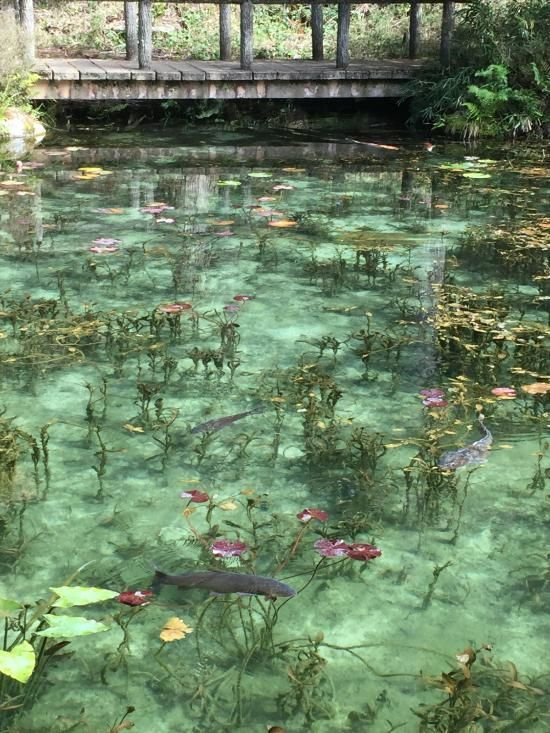 It is a real pond at Nemichi-jinja shrine, such as like the Claud Monet paintings in Seki, Gifu pref., Japan 岐阜県 関市 根道神社