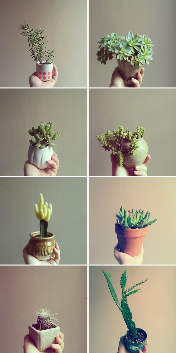 Little pots. Jacinta Moore photography via Sherie Muijs blog.