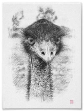 Emu Drawing Poster #emu #art #poster #drawing #bird #Australia   Roger Smith Art   Pinterest ...