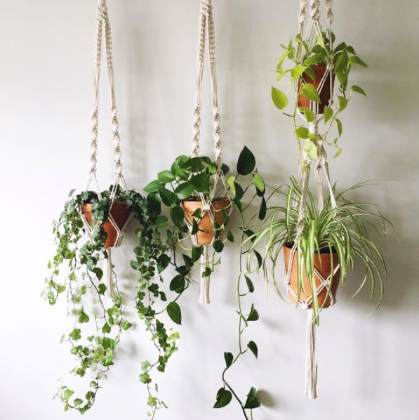 This layered hanging display in old-school macrame. | 25 Houseplants That Will Help You Plan Your Dream Indoor Jungle