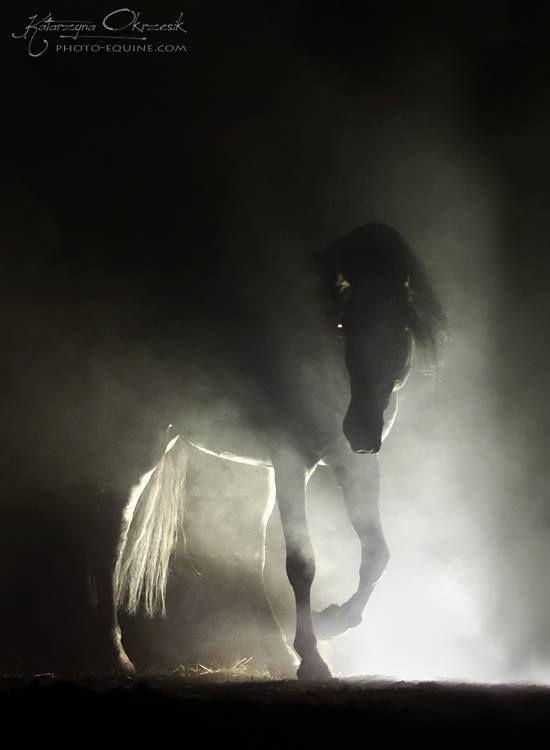 Night Horse @Katarzyna Okrzesik, Poland; @Escudero Vll PRE