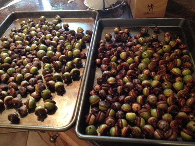How to Clean and Dry Acorns for Decorating: Collect newly fallen acorns, soak them in water and then bake them at 200 or 250 for an hour.