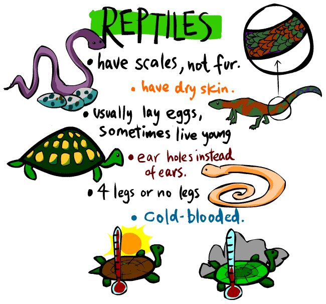 1000+ ideas about Reptiles Preschool on Pinterest | Preschool Painting ...