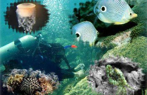 El Instituto   Portal del Instituto de Ciencias del Mar y Limnología, UNAM