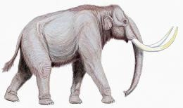 We may see mammoths roaming the earth once again. An adult female wooly mammoth with blood  and red muscle tissue was found in Russia's northern artic. Scientist may use it to clone the beast!