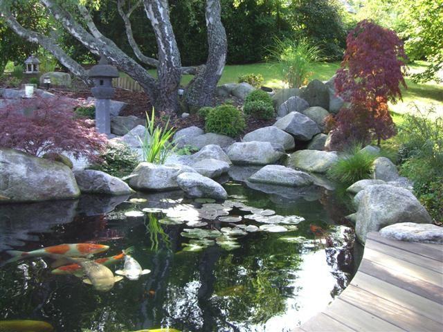 Le forum de passion bassin bassin de jardin baignade naturelle technique plantes