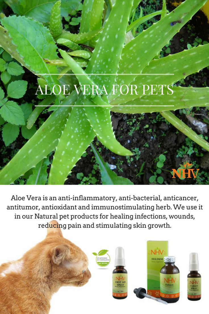 Cancer herbs for dogs - Vet Approved And Owner Recommended Natural Pet Supplements And Remedies For Many Pet Health Issues We Love Your Pets Naturally