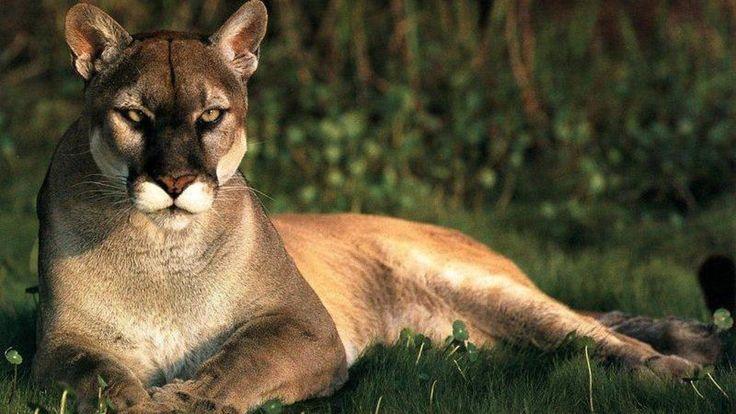 животные тропического леса: 16 тыс изображений найдено в Яндекс.Картинках