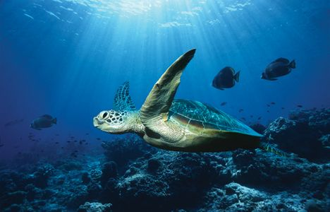 Google Image Result for http://media.treehugger.com/assets/images/2011/10/ocean-turtle.jpg