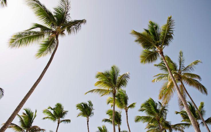 BASIC BUCKET. #Puntacana #MeliàHotel