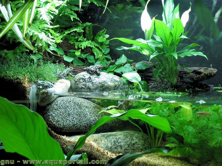 Aquaterrarium : définition