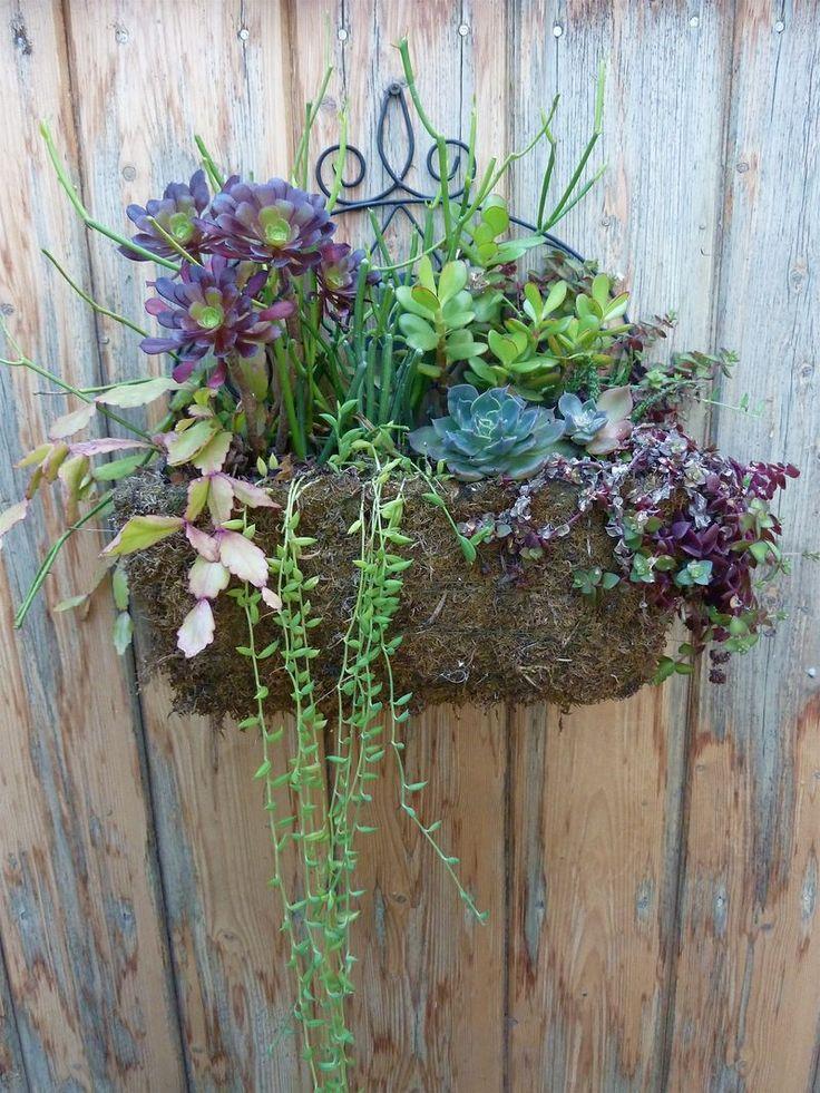 Hanging succulent planter