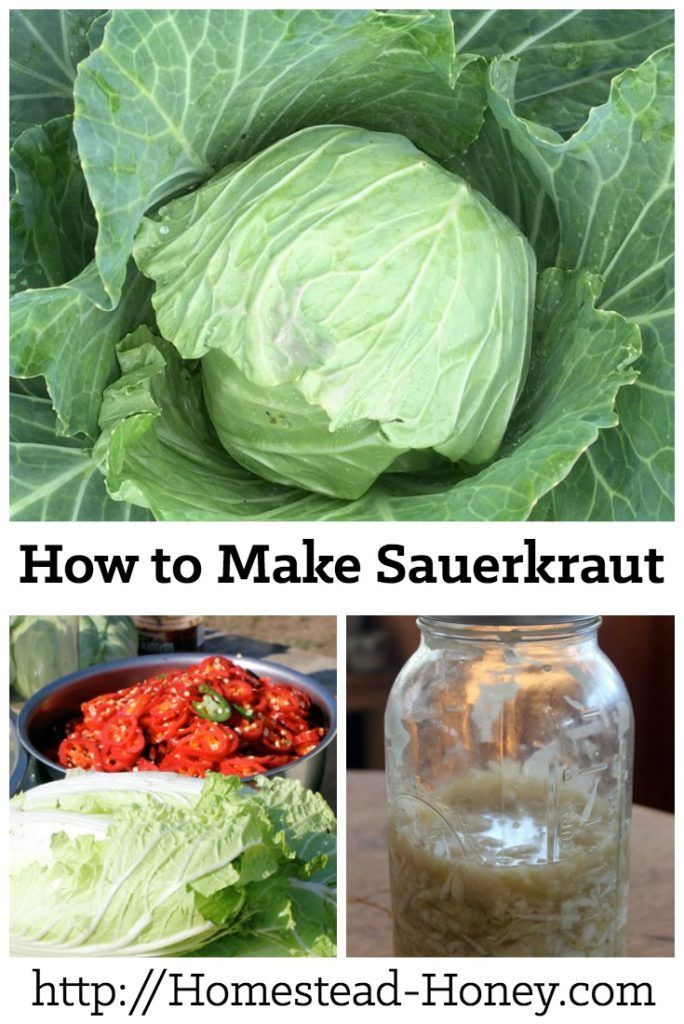 Learn how to make delicious and probiotic lacto-fermented sauerkraut with this recipe and video. | Homestead Honey